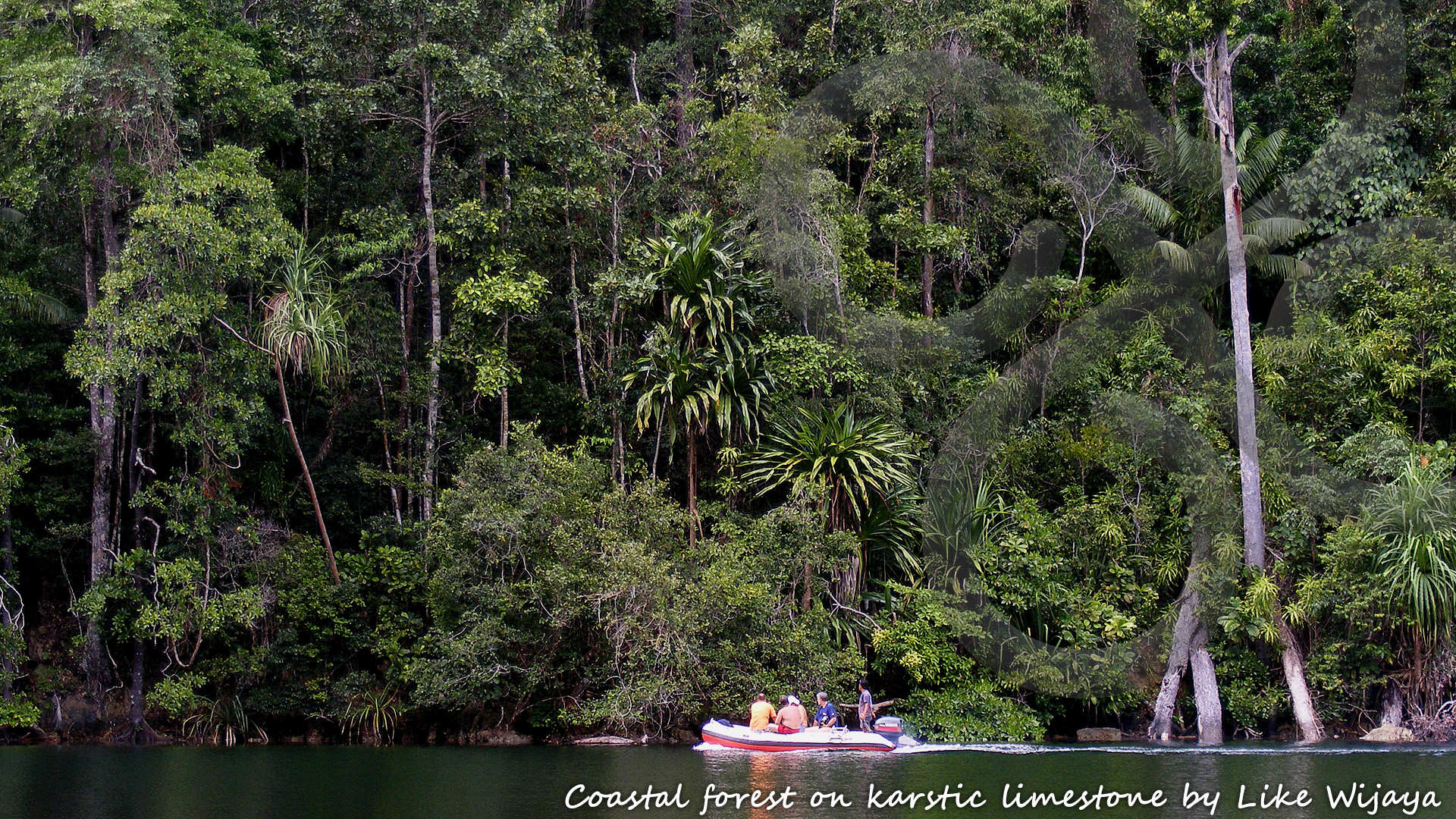 Cruising the Raja Ampat islands of Waigeo and Misool provides an interesting window of observation into otherwise impenetrable lowland forests on karstic limestone. Copyright © Like Wijaya